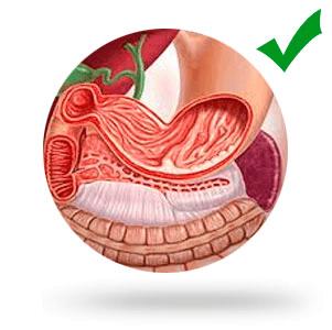 Восстанавливает работу желудка, желчного пузыря, печени, пораженных участков слизистой оболочки кишечника