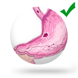 Угнетает процессы гниения и брожения в кишечнике, ускоряет обезвреживание токсинов в печени