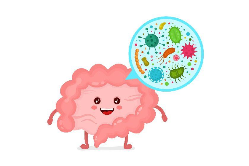 микроорганизмы кишечника человека