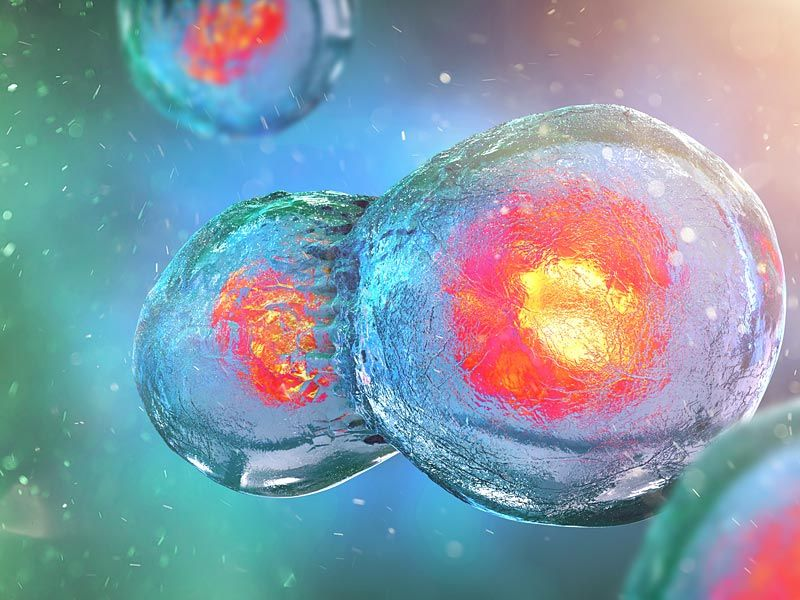 Питание ваших клеток