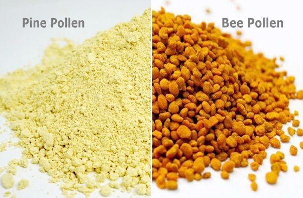 Отличие сосновой пыльцы от пыльцы пчел