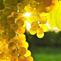 2 Различия между экстрактом и маслом из виноградных косточек
