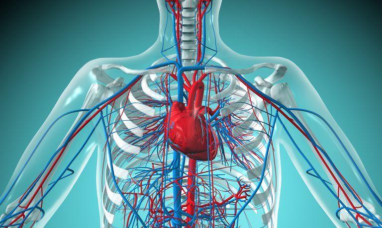 Кровяное давление - Причины | Что делать | Рекомендации