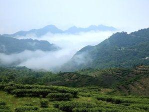 Китайский чай пользен при давлении