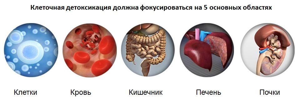Клеточная детоксикация