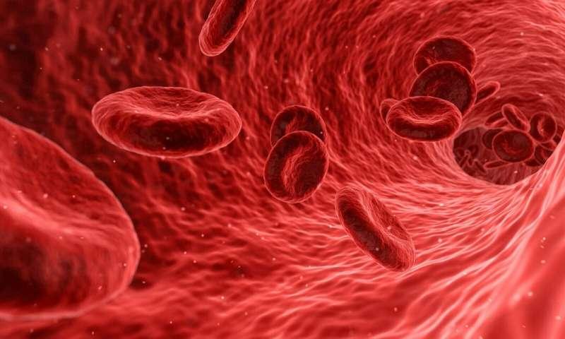 Ваша кровь отвечает за транспортировку всех видов веществ по всему телу,