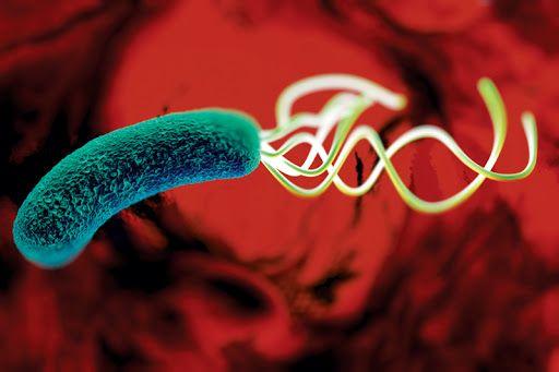 Профилактика инфекции H. pylori