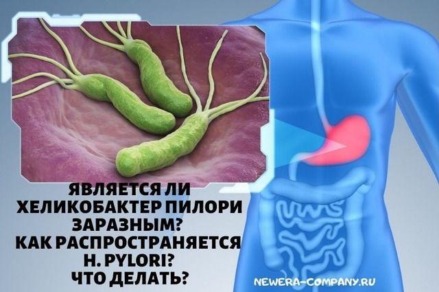 Является ли Хеликобактер пилори заразным? Как распространяется H. pylori? Что делать