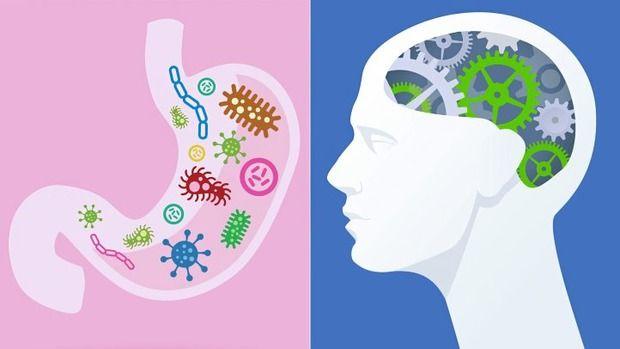 Как связаны кишечник и мозг?