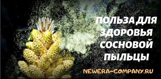 Польза для здоровья сосновой пыльцы