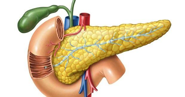 Что такое поджелудочная железа?